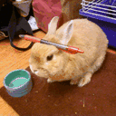 stuffonmyrabbit.net